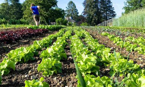 https://goetheanum.co/de/nachrichten/eine-landwirtschaft-ohne-pestizide-ist-möglich