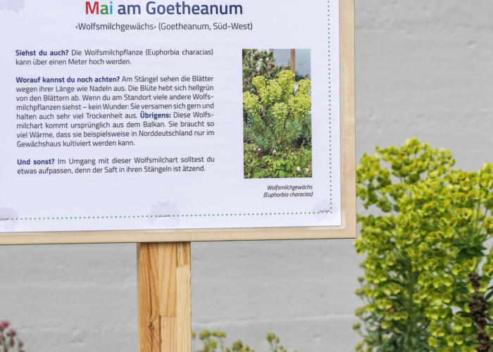Mai am Goetheanum – mit Naturerlebnisstationen