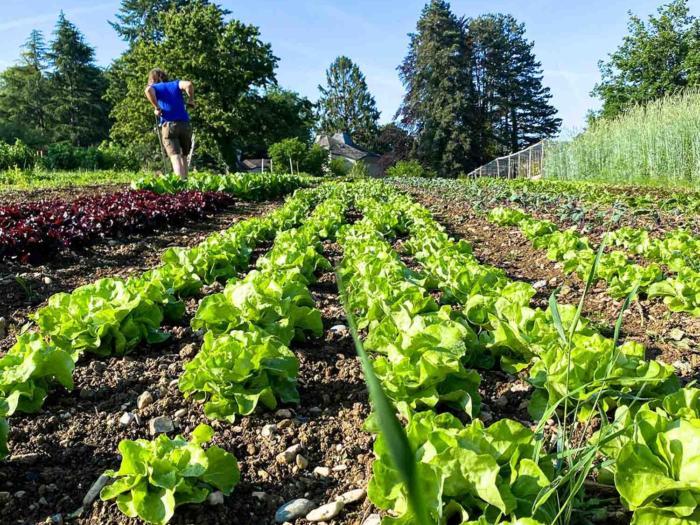«Cultivar sin pesticidas es posible»