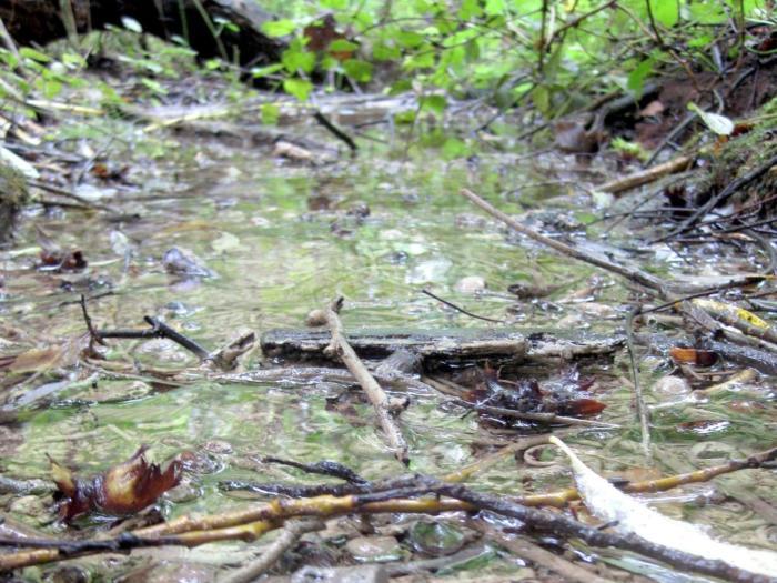 Schutz eines Biotops: Goetheanum beantragt provisorischen Baustopp