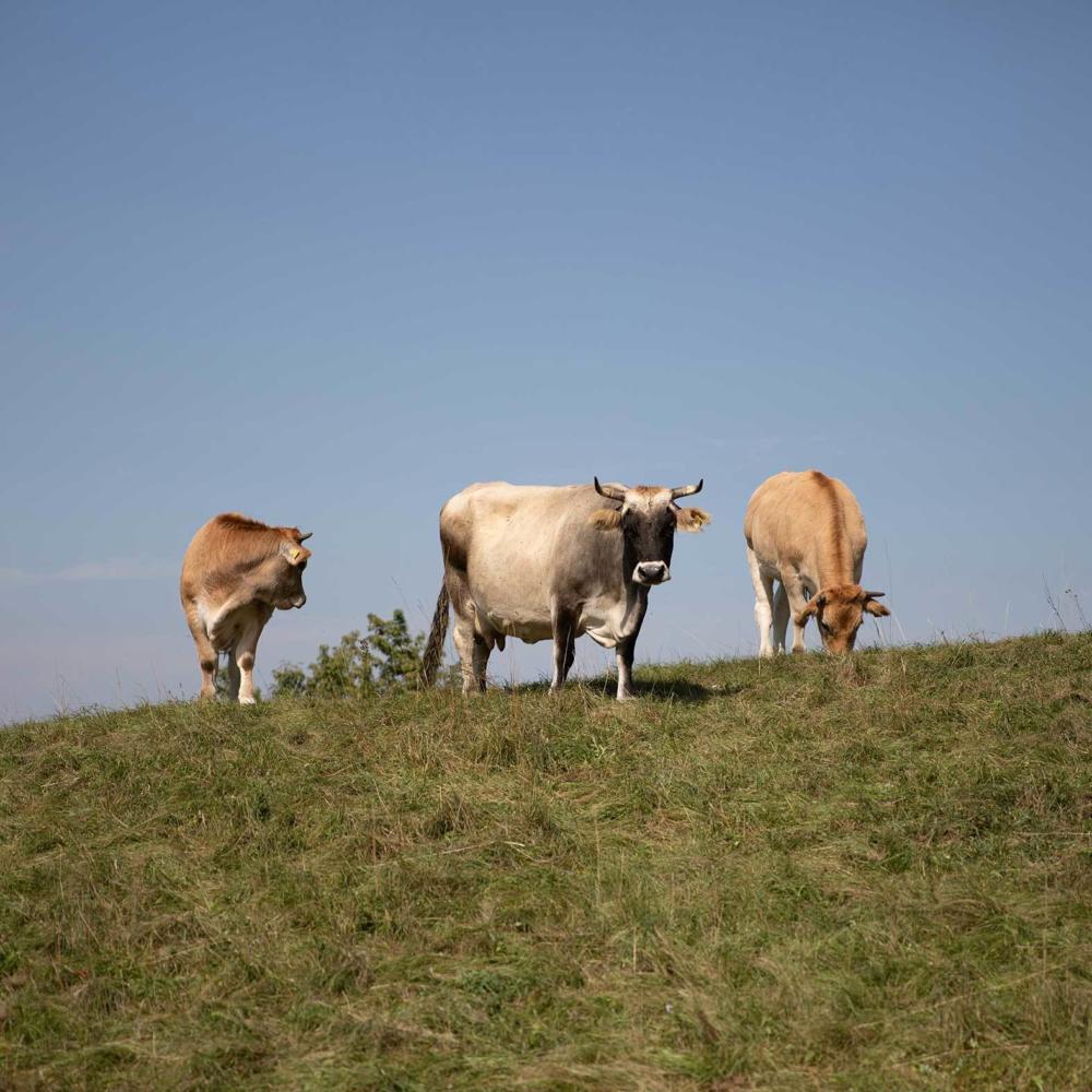 Living Farms: Chancen für eine nachhaltige Landwirtschaft